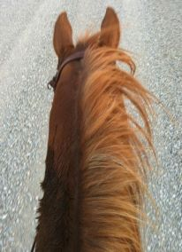 Nothing makes me feel more human and less like a mothership than spending some quality time with my horse.
